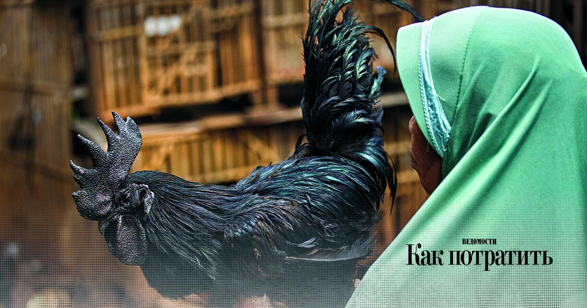Цып-цып, дорого: как черные курицы стали большими птицами