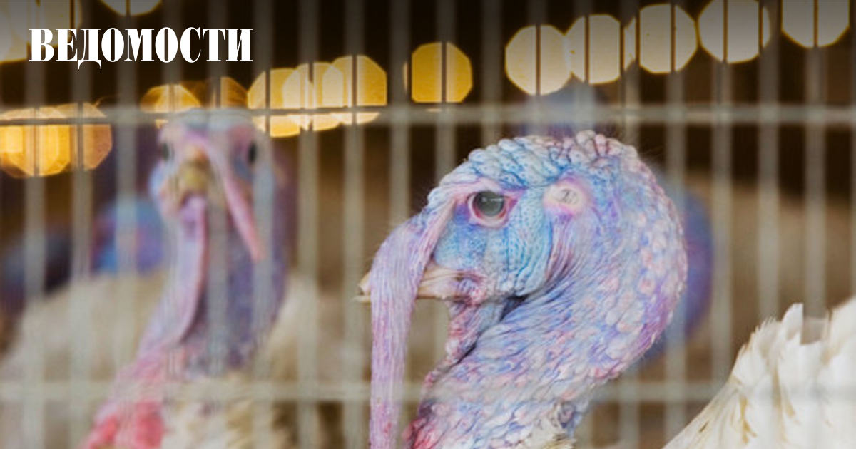 Ооо евродон птичий грипп thumbnail